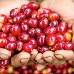Cherry-red_cherries-1024x680-480x319