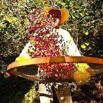 cafe-bresil-fazenda-ambiental-terroir-mococa-bob-o-link
