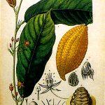 fiche botanique